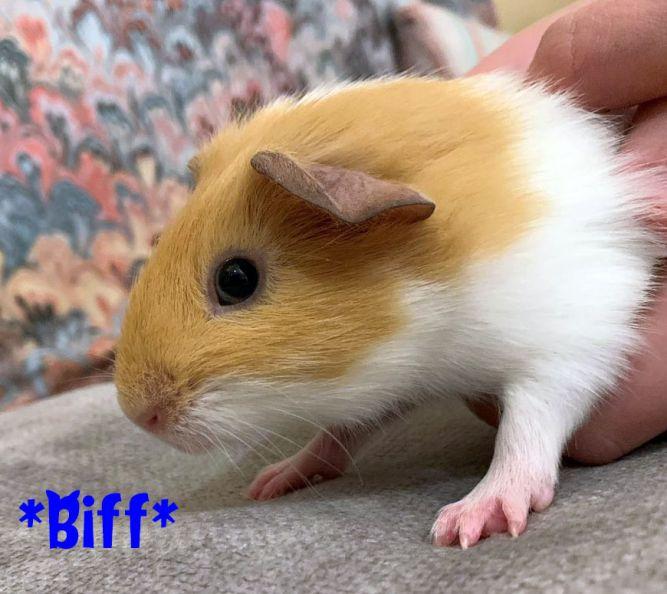 Biff (Bonded with Happy)