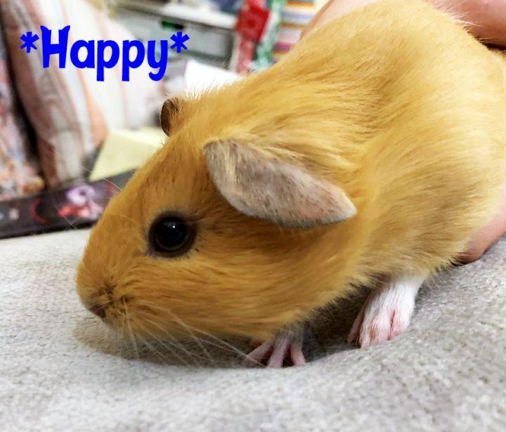 Biff (Bonded with Happy) 2