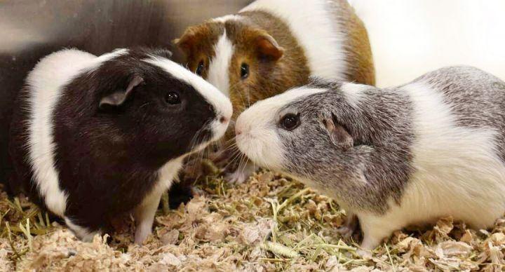 Alvin, Simon, & Theodore 1