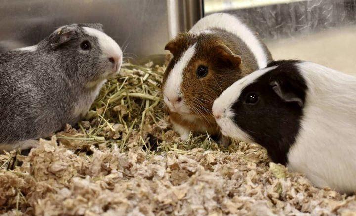 Alvin, Simon, & Theodore 2