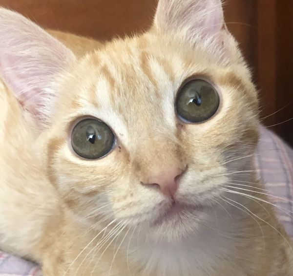 Orange County Pets Newly Up For Adoption: Storm, Greta ...