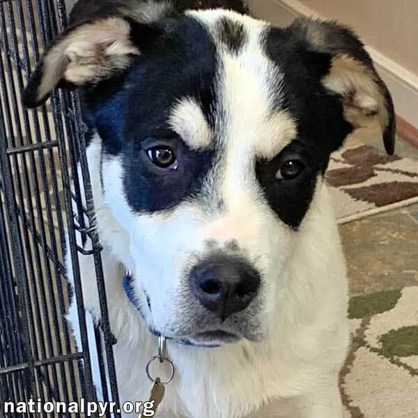 Brady in VA - Sweet, Smart, Fun Pup!