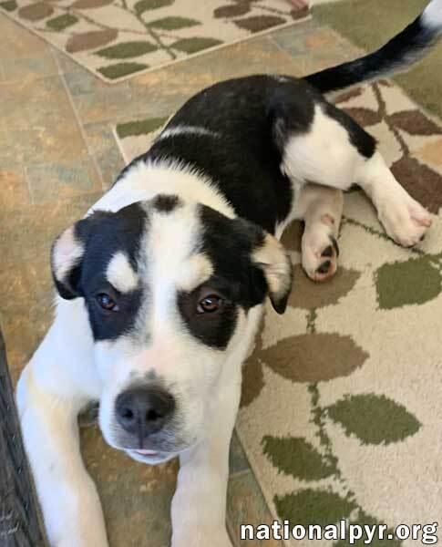 Brady in VA - Sweet, Smart, Fun Pup! 3