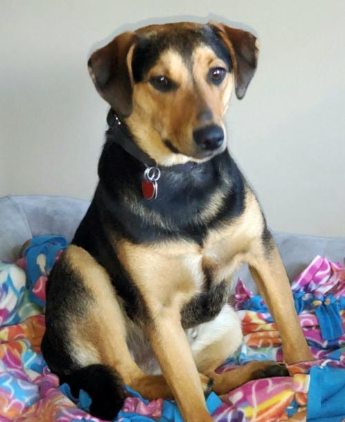 Jefferson, an adoptable Mixed Breed in Rockville, MD_image-3