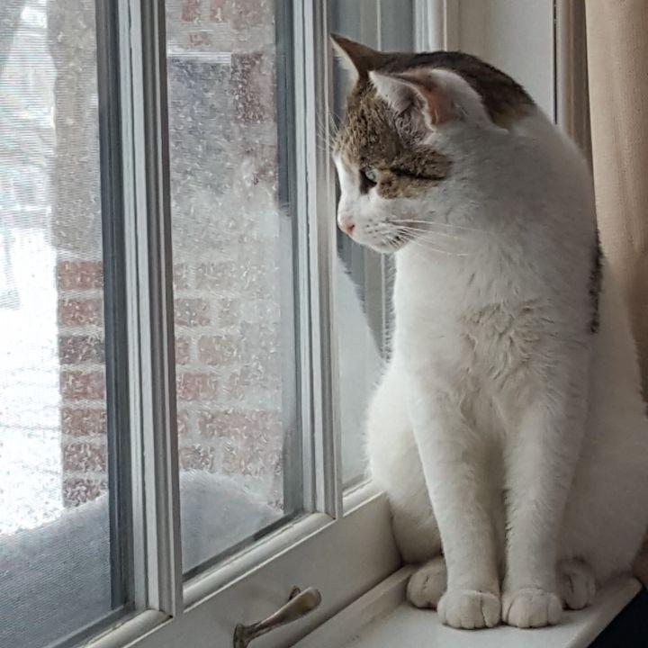 Charlie Doughnuts - Lap Cat! 3