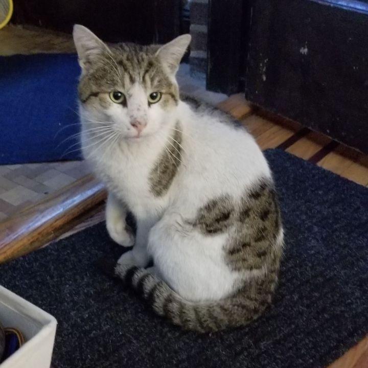 Charlie Doughnuts - Lap Cat! 5