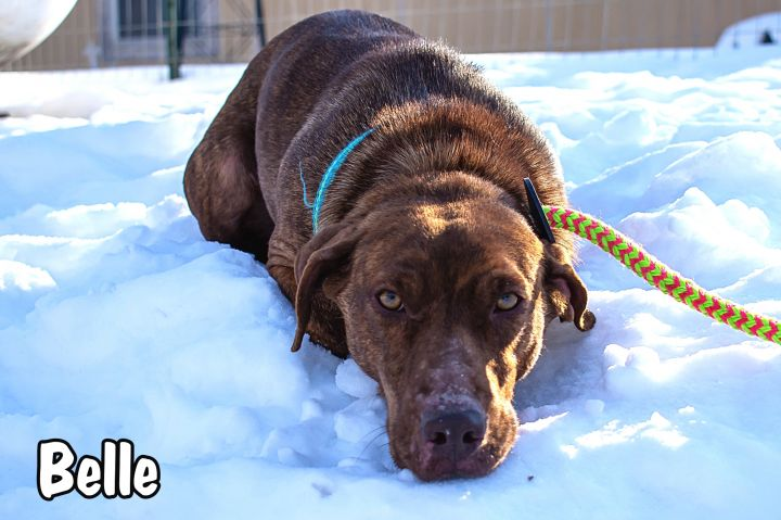 Belle, an adoptable Hound Mix in Omaha, NE
