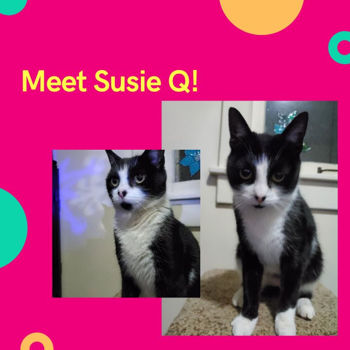 Susie Q  A-2898 2