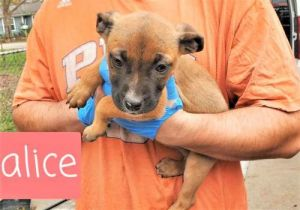 You can fill out an adoption application online on our official website Alice