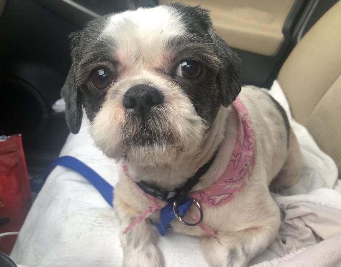 Lola (needs an angel)