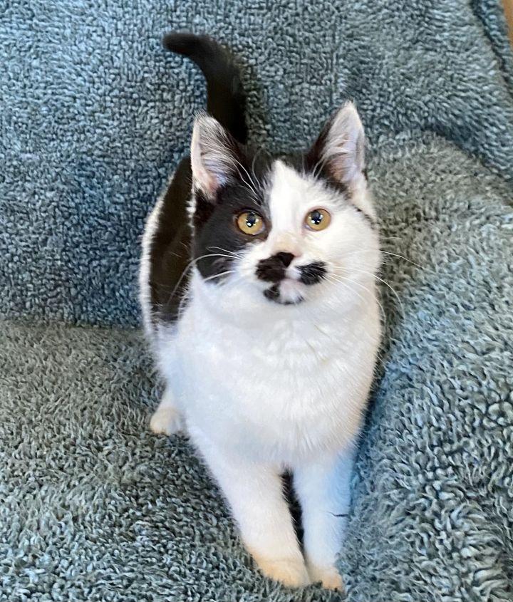Cat Benatar 2