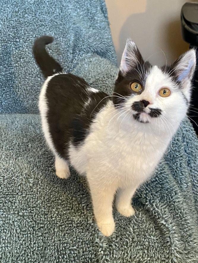 Cat Benatar