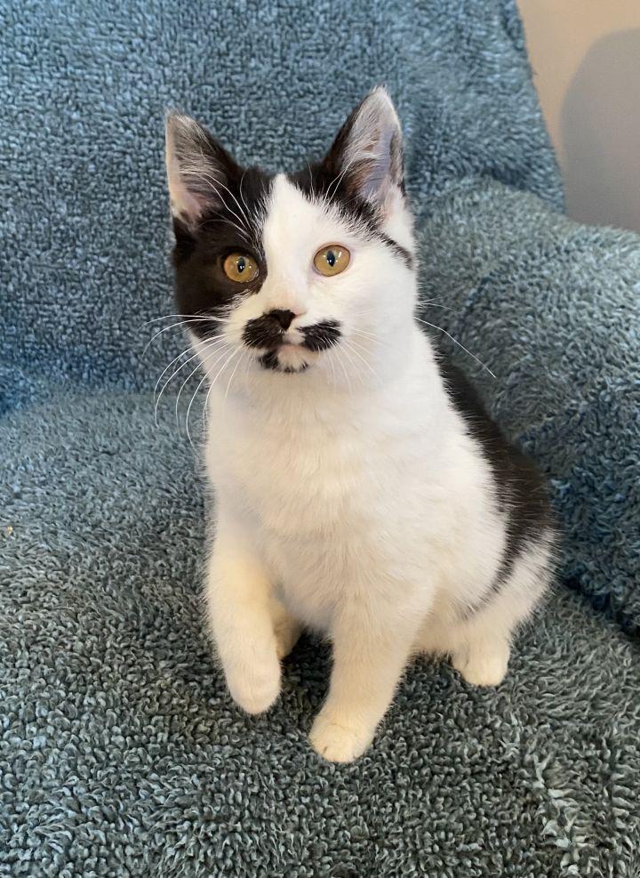 Cat Benatar 3