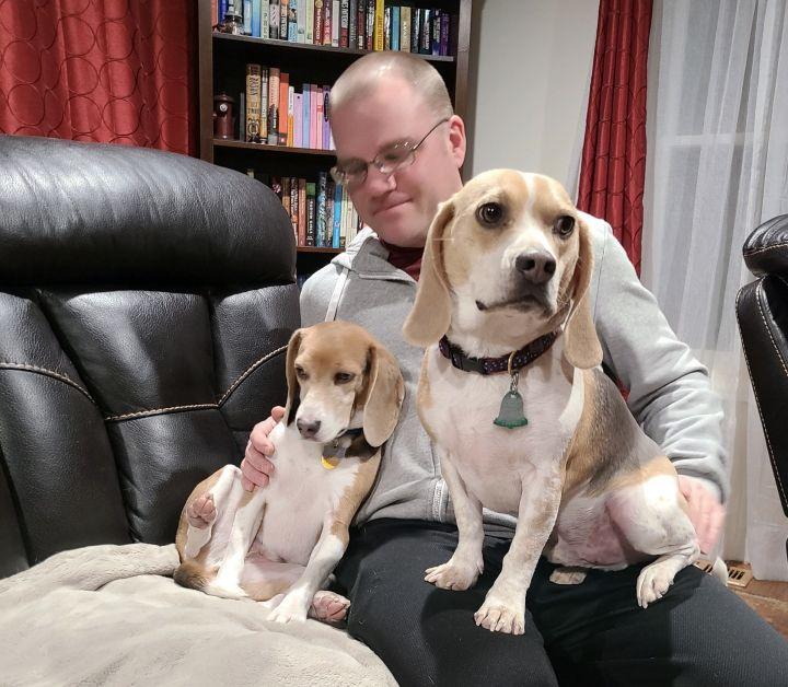 Mello (beagle perfection) 6