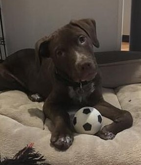 Pup Tuka 1