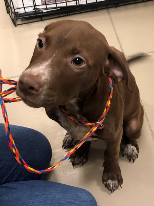 Pup Tuka 2