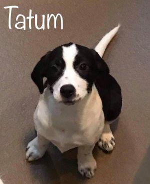 Tatum
