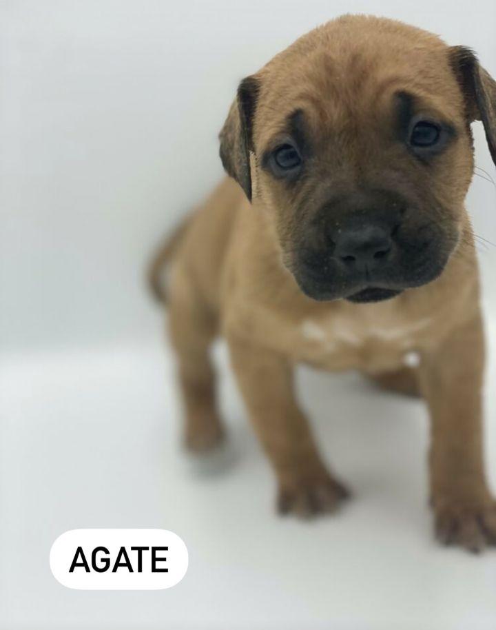 Agate 1