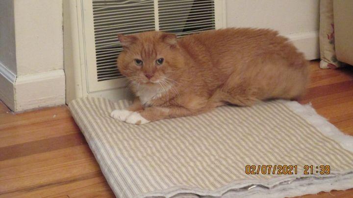 Scruff - Retired Street Cat 2