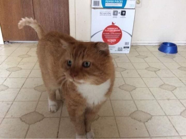 Scruff Retired Street Cat detail page