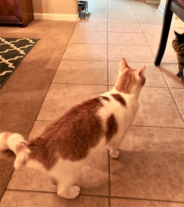 Joe- a curious cat!! 2