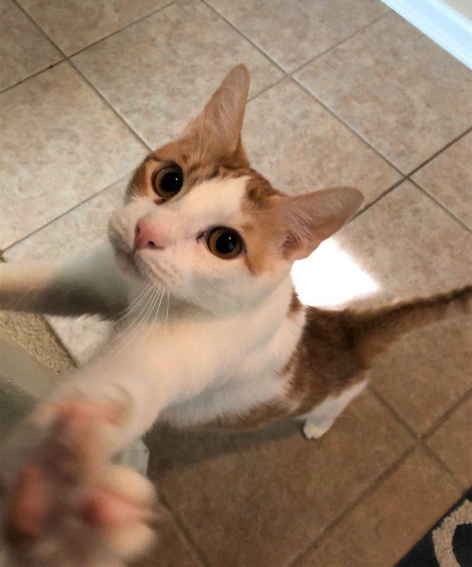 Joe- a curious cat!!