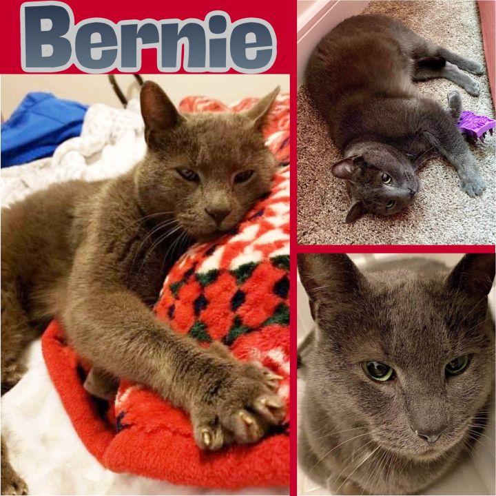 Bernie 3