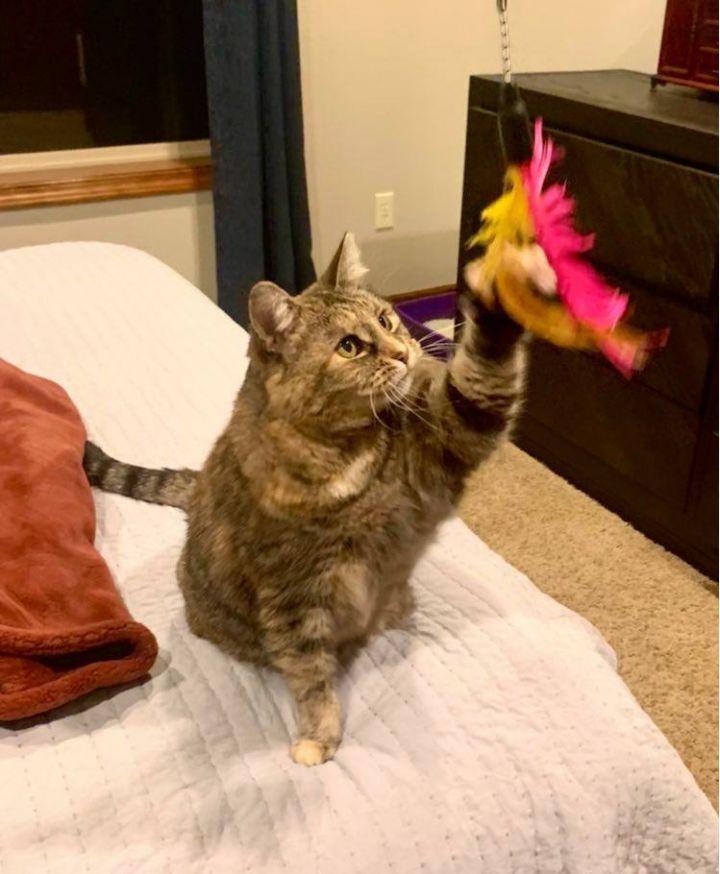 Sweetums (spunky senior cat) VIDEO 3