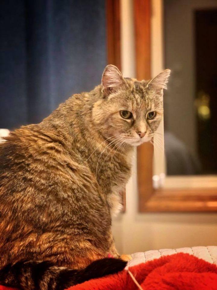 Sweetums (spunky senior cat) VIDEO 5