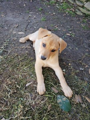 My name is Koko and I am a very active 2 month year old shepherd mix puppy I love to