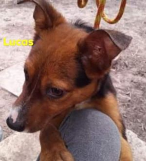 Looking Glass Animal Rescue is a 501c3 virtual rescue using a network of dedicated fosters througho