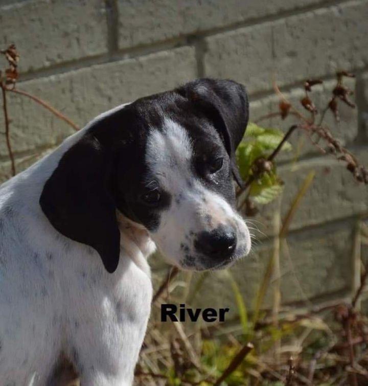 River - $400 1