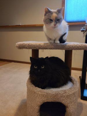 Luna and Nora (Bonded Pair)