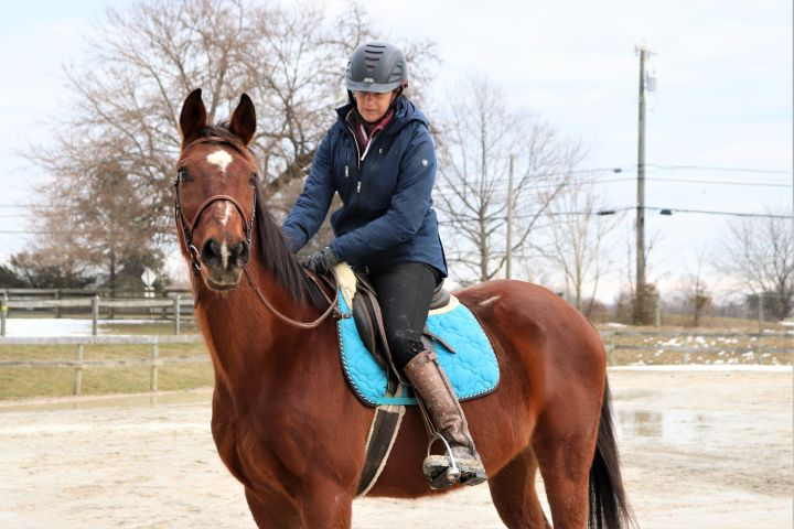 Uri, an adopted Thoroughbred in Woodbine, MD_image-4