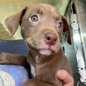 I was pulled from a local animal control agency to be saved from euthanasia