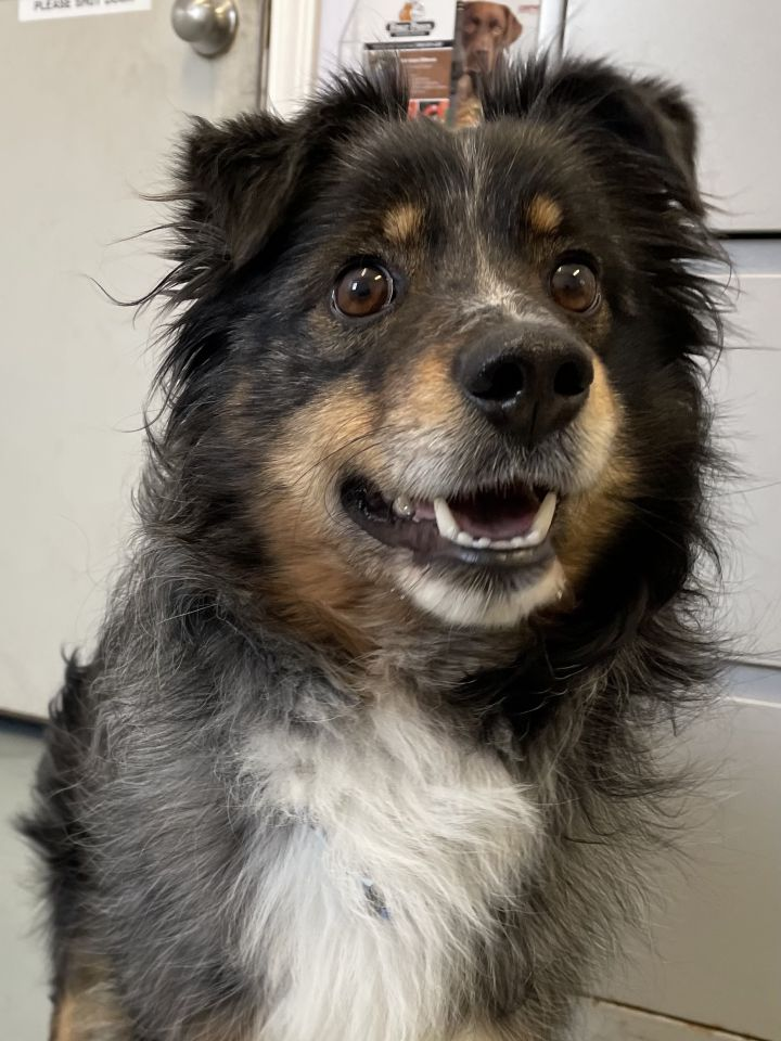 Sheldon, an adopted Mixed Breed in Big Rapids, MI_image-3
