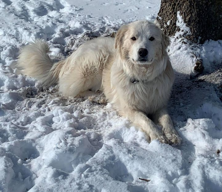 Tipper ((**Spring Special, adoption fee only $175.00 until April 24th**) 2