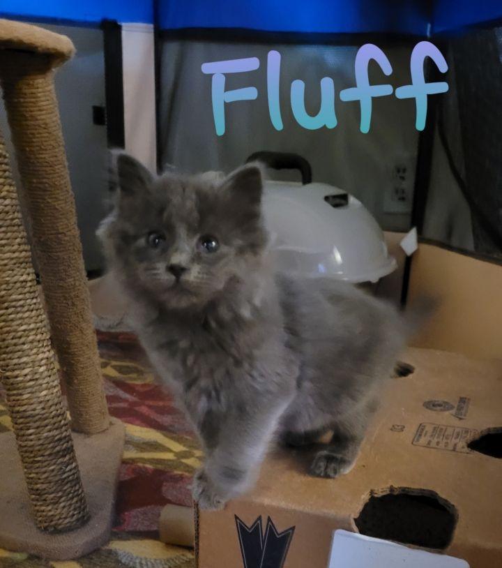 Fluff 1