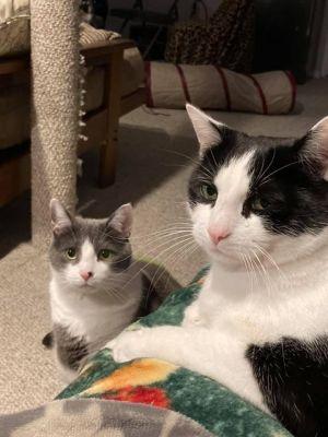 Milo and Shiloh