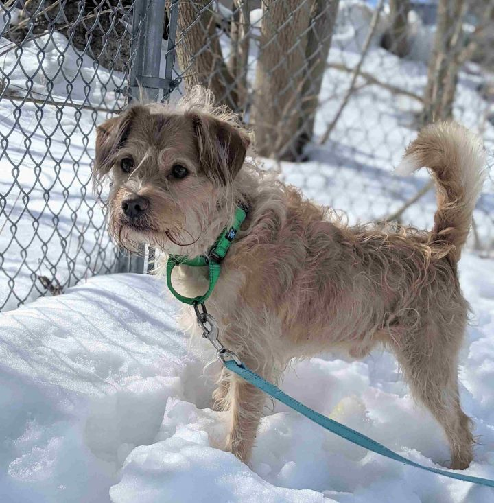 Bandit, an adopted Terrier Mix in Danbury, CT