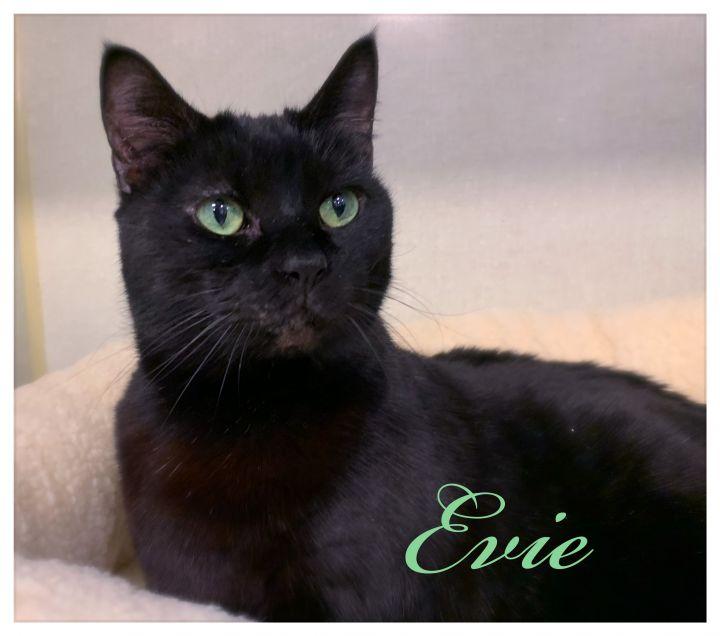 Evie 1