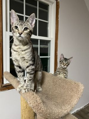 Baxter & Babette (Double Adoption ONLY)
