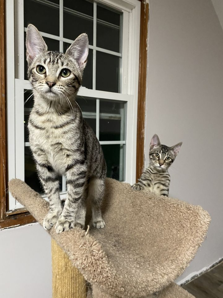 Baxter & Babette (Double Adoption ONLY) 1