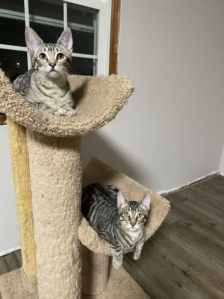 Baxter & Babette (Double Adoption ONLY) 4