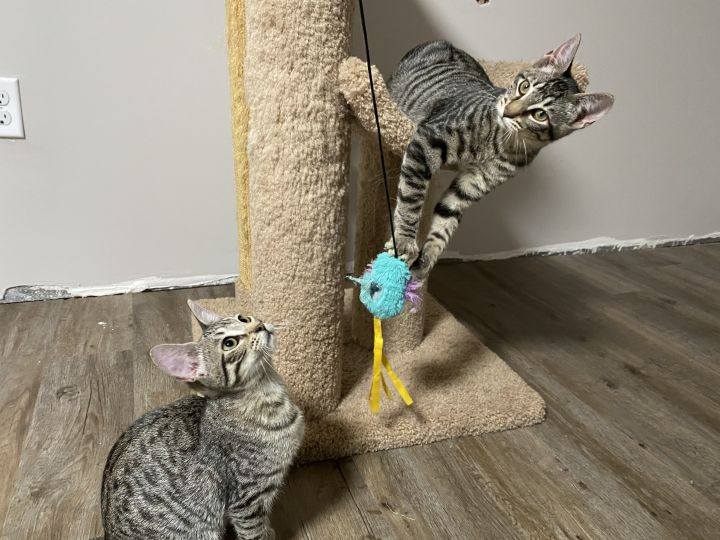 Baxter & Babette (Double Adoption ONLY) 5