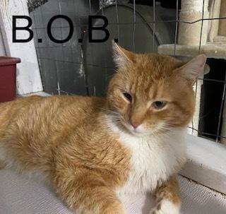 B.O.B. (Big Orange Boy) 1