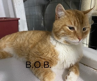 B.O.B. (Big Orange Boy) 2