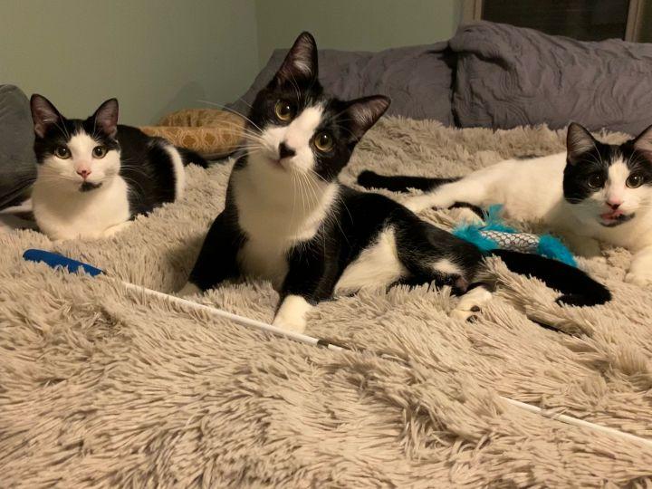 Romeo, Sammy, and Forrey (Bonded Trio) 5