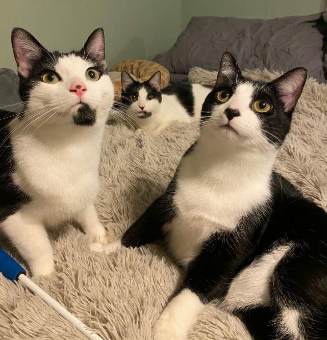 Romeo, Sammy, and Forrey (Bonded Trio) - Pending Adoption