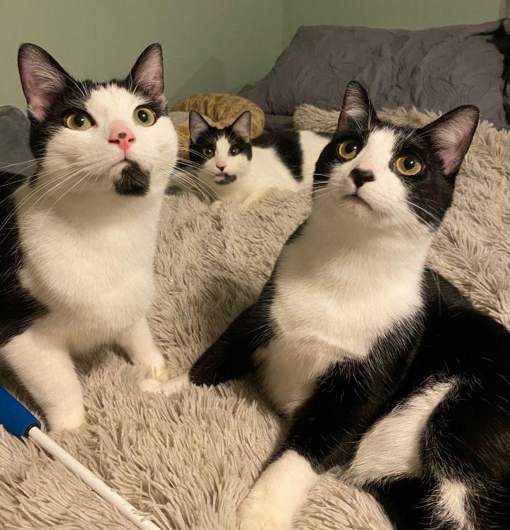 Romeo, Sammy, and Forrey (Bonded Trio) 1